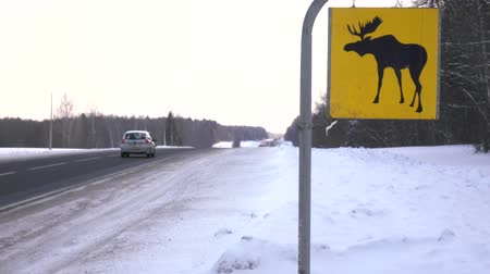 ter cuidado : Road sign. Moose are wild animals