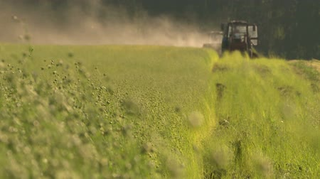 Flax field during harvest at summer day. Agricultural machinery in operation. Stock Footage