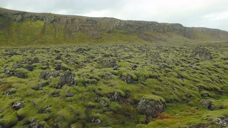 liken : old lava field covered by moss near hills in Iceland, in autumn day, cloudy weather, moving shot