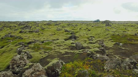 liken : landscape of natural ground in Iceland covered green moss in fall day, near road with moving cars