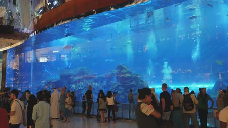 yaban hayatı : DUBAI, U.A.E. - JAN, 2018: visitors of Dubai mall and tourists are watching fishes in a huge aquarium Stok Video