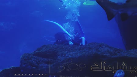 school of shark : scuba diver is plunged in huge aquarium and cleaning it, big shark and fishes
