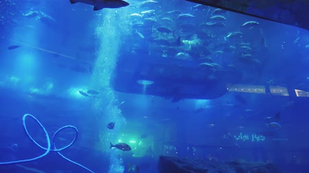 seaquarium : school of fish is moving in oceanarium around a plunged platform with visitors people Stock Footage