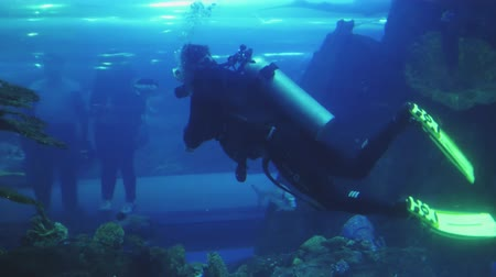 shark : male diver with scuba is swimming inside large aquarium with tropical fishes, visitors in tunnel