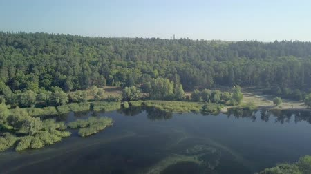 aerial view on shore of calm river, covered forest in sunny summer morning