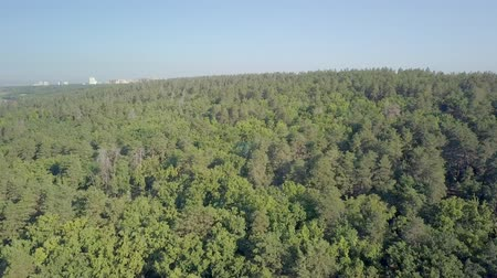 aerial shot, camera is flying over dense mixed forest in sunny summer day Стоковые видеозаписи