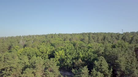 aerial view over forest in sunny summer day