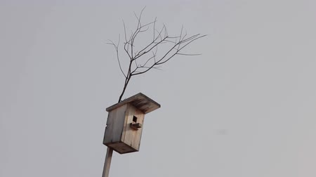 A birdhouse on a tree swaying in the wind
