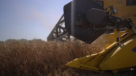 enorme : Wheat harvesting, in the background of agricultural machinery harvester and tractor working in the field, slow motion 50 fps