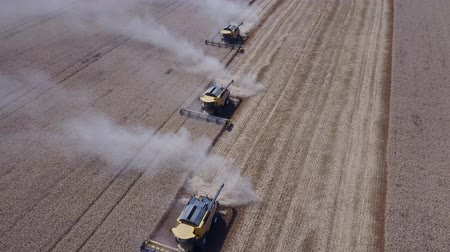 Many harvester goes one after another for collecting a rich harvest of wheat in the field from high vertical angle drone shot 4K