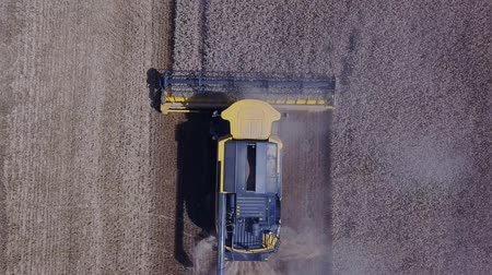 hozam : Spectacular straight down aerial view of combine harvesters harvesting grains of wheat 4K