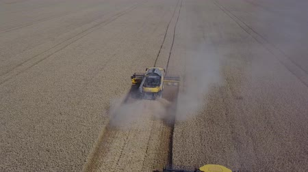 verim : Agriculture footage which shows 3 harvesters are collecting harvest grains of wheat Drone fly back to show wide angle 4K Stok Video