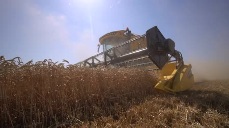 farm equipment : Low Angle shot of harvester move and collect grain of wheat harvest summer slow motion Stock Footage