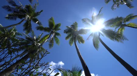 praslin : Sun breaks through palms leaves in tropical Bahamas island in Carribean sea 4K Footage