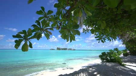 seychely : Paradise place.Camera is moving from beach to blue lagoon in Maldives fantastic view 4K
