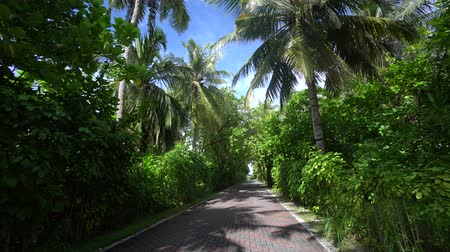 seychely : Exellent footage from tropic island Maldives walk to path surrounded by high coconut trees and palms in sunny day 4K Dostupné videozáznamy