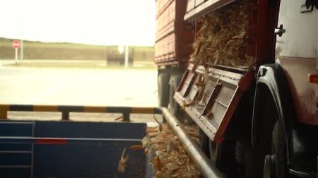 Truck full of corn unload it to warehouse in the plant slow motion HD Vidéos Libres De Droits