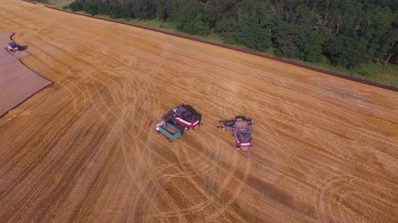 grande angular : Aerial wide angle shot where three combines are working on the field for harvest wheat 4K