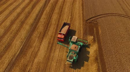 трактор : Truck drive to harvester to load wheat in it 4K Стоковые видеозаписи
