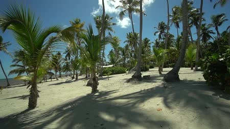 ladigue : Tropic uninhabited island fantastic viewat palms and clean sand on the seashore of carribean sea from gimbal Stock Footage