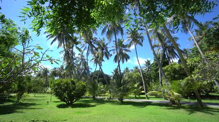 caribe : Maldives view to the high palms behind leaves in green park with fantastic lawn 4K footage Vídeos
