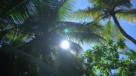 praslin : Sun breaks through palm leaves in tropical Hawaii island in Pacific ocean 4K Footage