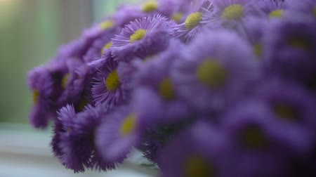 camomila : A bouquet of purple (lilac) flowers is in a vase by the window. close-up. Vídeos