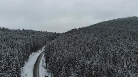 Winter mountain road surrounded by snowy trees. Stok Video