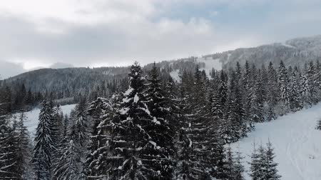 Winter landscape in the mountains aerial view, 4k drone.Trees spruce in the snow