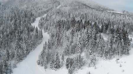 Winter landscape in mountains, fir trees in snow, top view 4k, drone.
