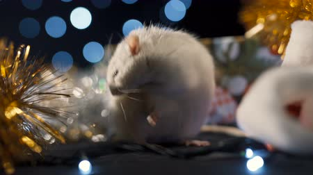 Symbol of 2020, a white rat on a background of a garland. New year concept Stok Video