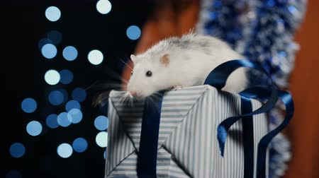 2020 white metal rat holding a gift in female hands