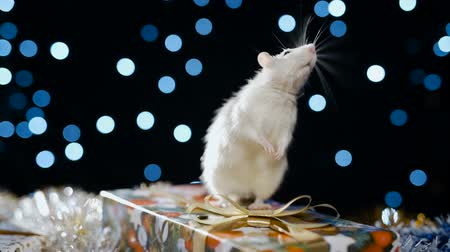 szczur : White metal rat, symbol of 2020, against the background of a garland, close-up Wideo