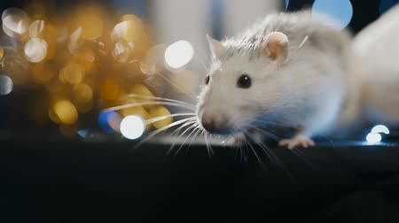 White metal rat, symbol of 2020 on a background of blue garland, close-up Stok Video