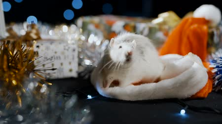 astroloji : White metal rat symbol of 2020 sits in a santa claus hat Stok Video