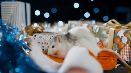 White metal rat symbol of 2020 sits in a santa claus hat Stock Footage