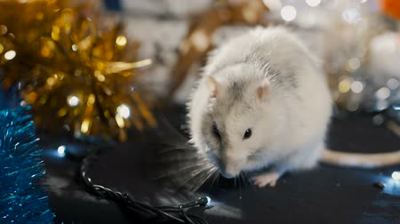 White metal rat, symbol of 2020 on, close-up Stock Footage