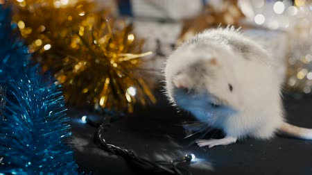 White metal rat, symbol of 2020, against the background of a garland, close-up Stok Video