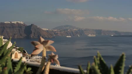prickly : Picturesque cactuses and romantic panoramic view from a height on caldera,rocks and vulcan in Fira town at summer sunny day. Beautiful natural landscape in Santorini, Greece