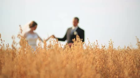 держит : Groom kissing his beautiful bride while they both strolling on yellow wheat field