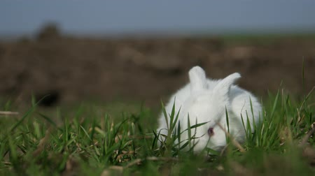 vadon : White rabbit in spring green grass background Stock mozgókép