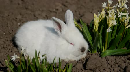 heykelcik : Little rabbit sits in white flowers, 4 in the video