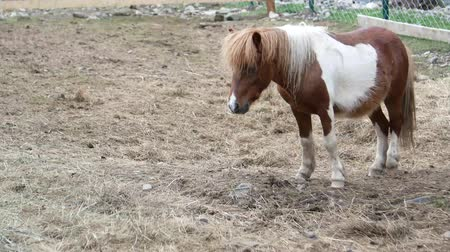 poník : Homemade pony, beautiful little horse, 4k