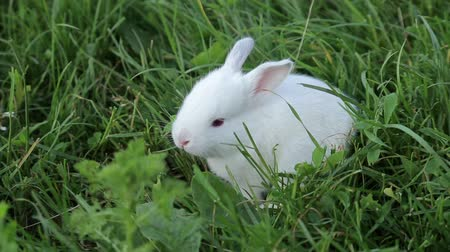 kürklü : Little rabbit on green grass