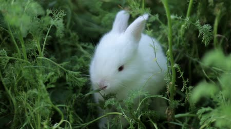 yırtıcı hayvan : Little rabbit on green grass