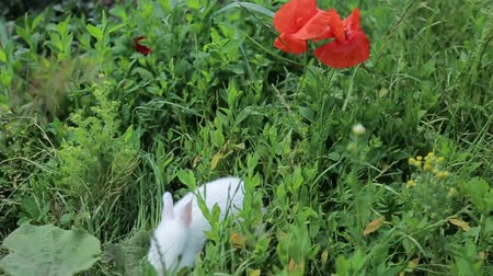 rabbit ears : rabbit on green grass, white rabbit
