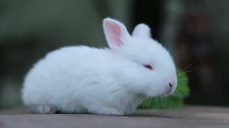wełna : rabbit on green grass, white rabbit