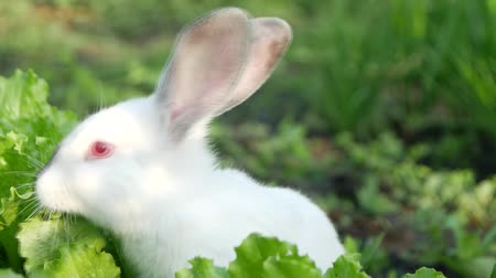 rabbit ears : Little funny rabbit on the field in summer