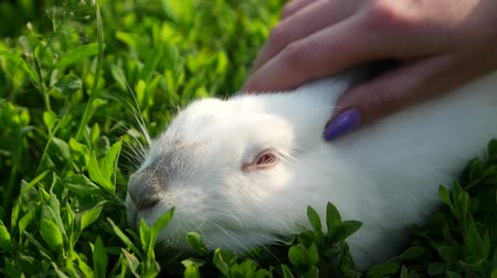 Hand of a child caressing a white rabbit in sunlight