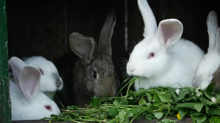 A group of rabbits eats, black and white rabbits, rabbits on the farm